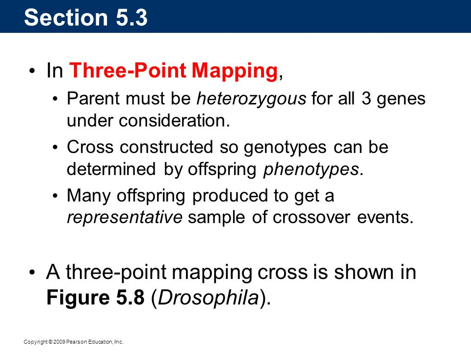 Copyright © 2009 Pearson Education, Inc. In Three-Point Mapping, Parent must be heterozygous for all 3 genes under consideration. Cross constructed so