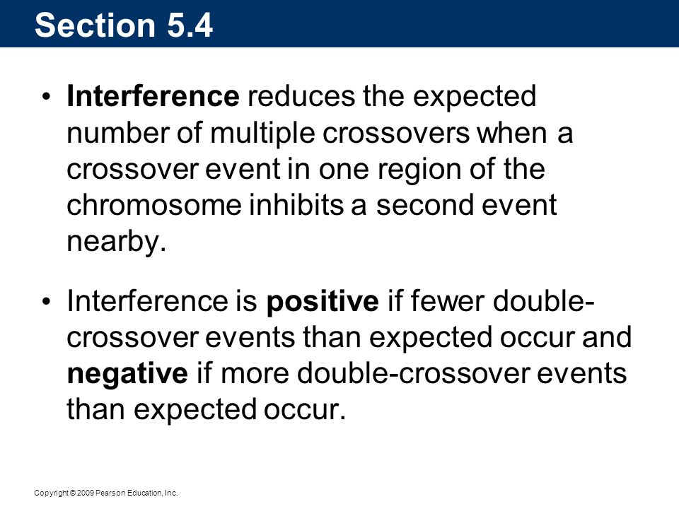 Copyright © 2009 Pearson Education, Inc. Interference reduces the expected number of multiple crossovers when a crossover event in one region of the c