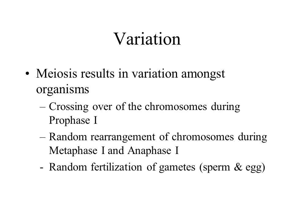 Variation Meiosis results in variation amongst organisms –Crossing over of the chromosomes during Prophase I –Random rearrangement of chromosomes during Metaphase I and Anaphase I -Random fertilization of gametes (sperm & egg)