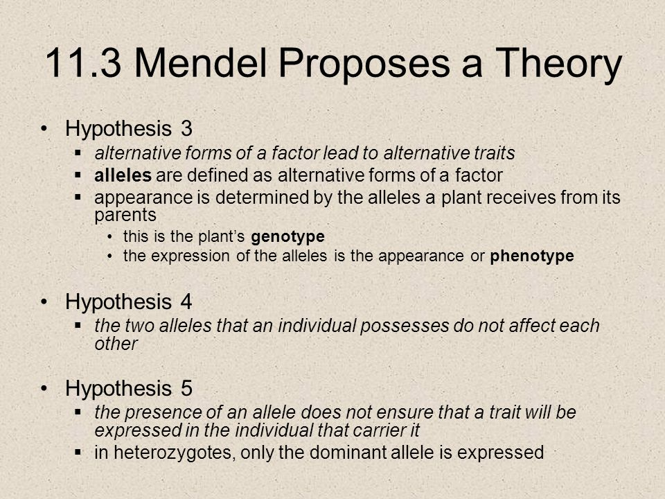 11.3 Mendel Proposes a Theory Hypothesis 3  alternative forms of a factor lead to alternative traits  alleles are defined as alternative forms of a factor  appearance is determined by the alleles a plant receives from its parents this is the plant's genotype the expression of the alleles is the appearance or phenotype Hypothesis 4  the two alleles that an individual possesses do not affect each other Hypothesis 5  the presence of an allele does not ensure that a trait will be expressed in the individual that carrier it  in heterozygotes, only the dominant allele is expressed