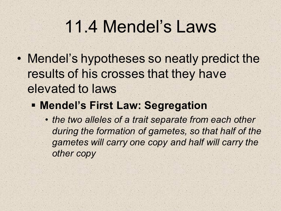 11.4 Mendel's Laws Mendel's hypotheses so neatly predict the results of his crosses that they have elevated to laws  Mendel's First Law: Segregation the two alleles of a trait separate from each other during the formation of gametes, so that half of the gametes will carry one copy and half will carry the other copy