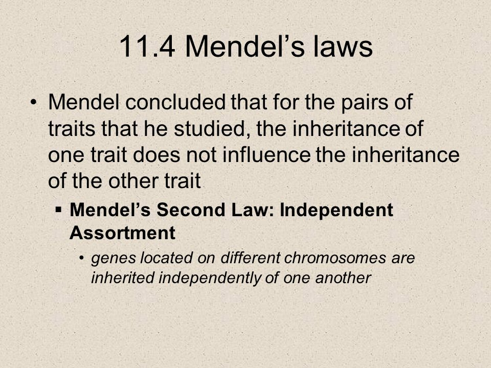 11.4 Mendel's laws Mendel concluded that for the pairs of traits that he studied, the inheritance of one trait does not influence the inheritance of the other trait  Mendel's Second Law: Independent Assortment genes located on different chromosomes are inherited independently of one another