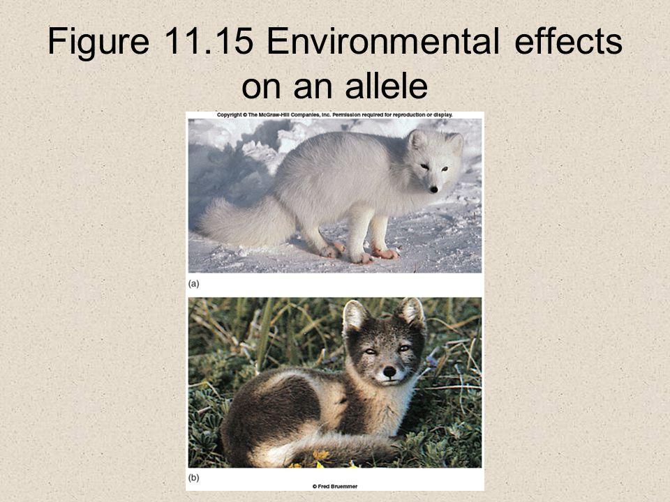 Figure 11.15 Environmental effects on an allele