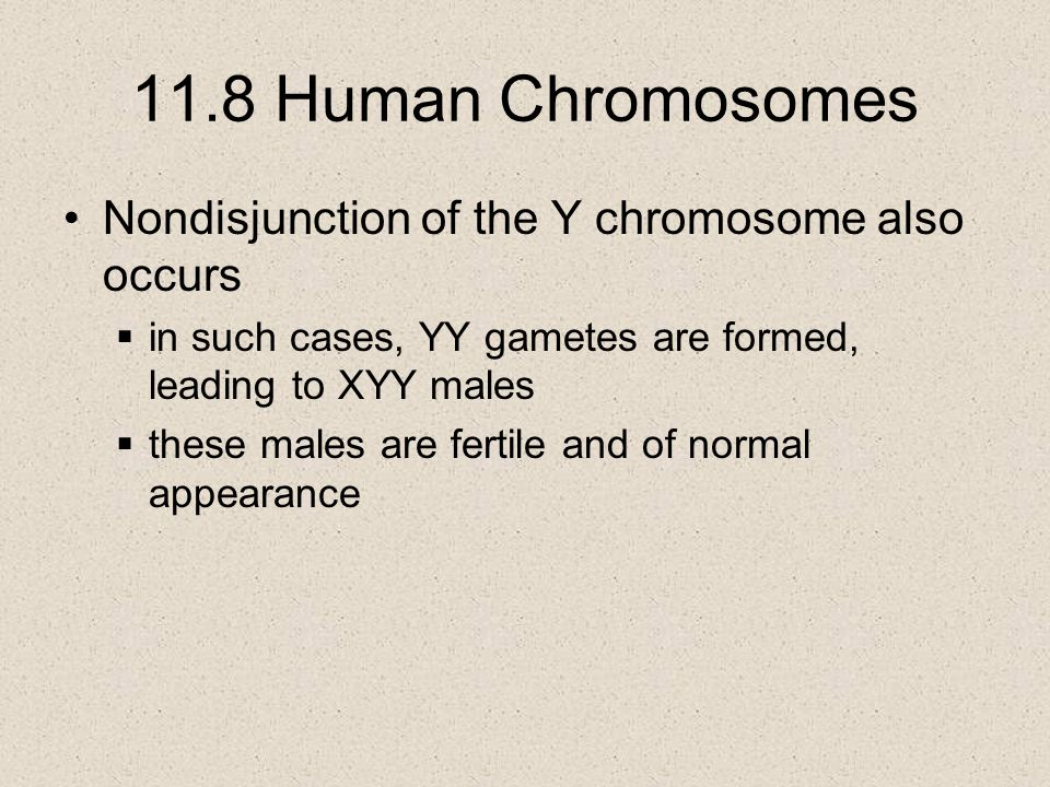 11.8 Human Chromosomes Nondisjunction of the Y chromosome also occurs  in such cases, YY gametes are formed, leading to XYY males  these males are fertile and of normal appearance