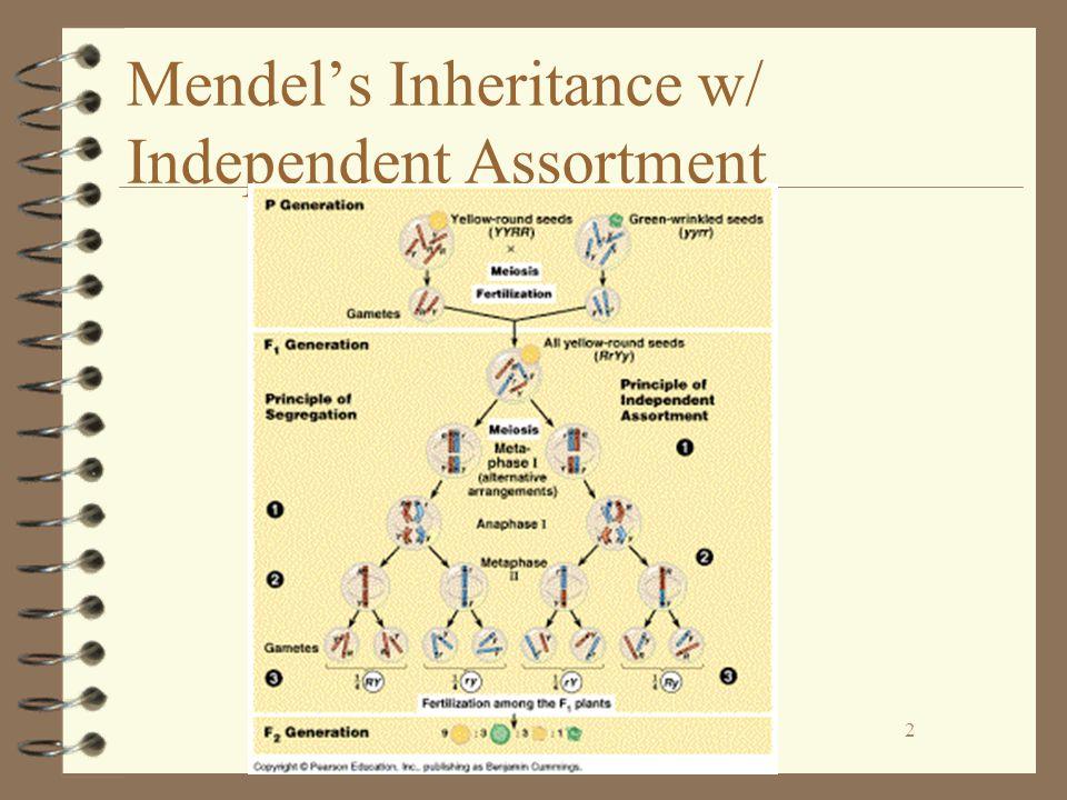 2 Mendel's Inheritance w/ Independent Assortment 2