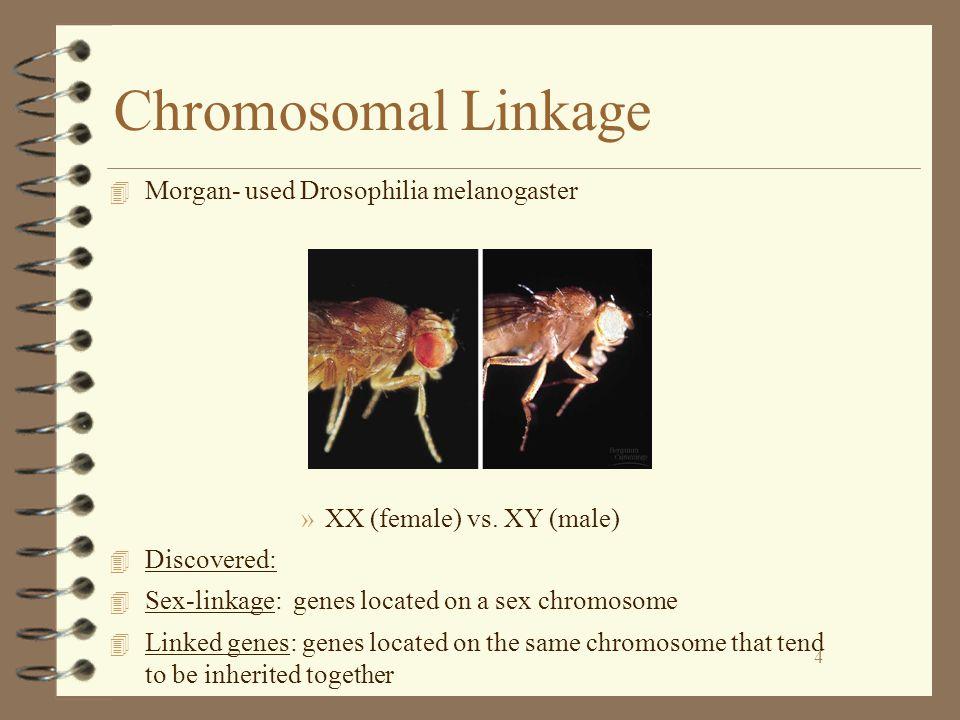 4 Chromosomal Linkage 4 Morgan- used Drosophilia melanogaster »XX (female) vs.