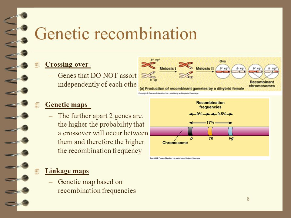 8 Genetic recombination 4 Crossing over –Genes that DO NOT assort independently of each other 4 Genetic maps –The further apart 2 genes are, the higher the probability that a crossover will occur between them and therefore the higher the recombination frequency 4 Linkage maps –Genetic map based on recombination frequencies