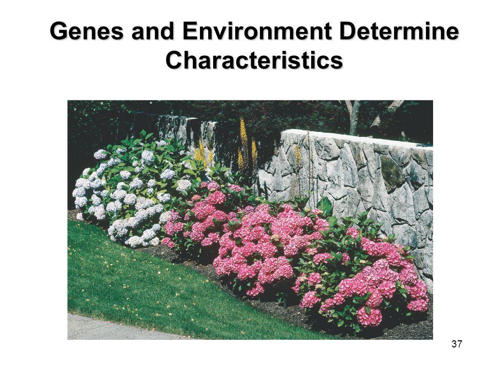 36 Genotypes  Homozygous genotype - gene combination involving 2 dominant or 2 recessive genes (e.g. RR or rr); also called pure  Homozygous genotyp