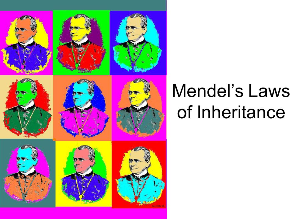 4 Gregor Johann Mendel  Between 1856 and 1863, Mendel cultivated and tested some 28,000 pea plants  He found that the plants' offspring retained tra