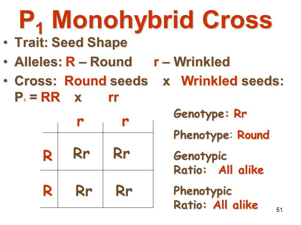 50 Monohybrid Crosses