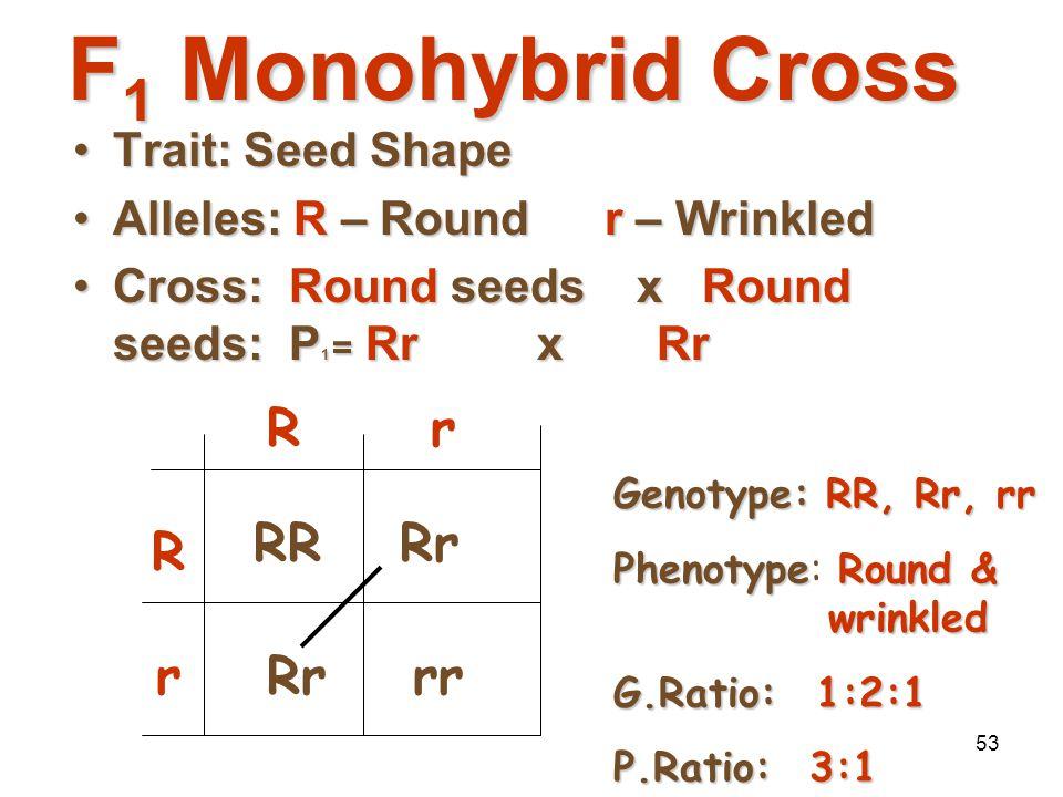 52 P 1 Monohybrid Cross Review  Homozygous dominant x Homozygous recessive  Offspring all Heterozygous (hybrids)  Offspring called F 1 generation 