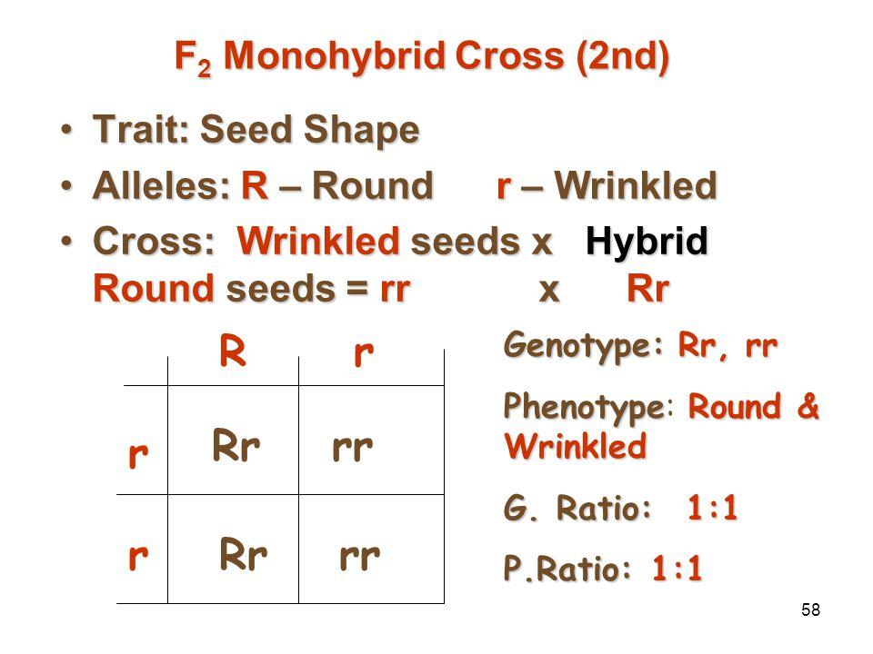 57 Trait: Seed ShapeTrait: Seed Shape Alleles: R – Roundr – WrinkledAlleles: R – Roundr – Wrinkled Cross: Pure Round seeds x Hybrid Round seedsCross: