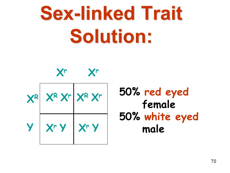 69 Sex-linked Trait Problem Example: Eye color in fruit flies (red-eyed male) x (white-eyed female) X R Y x X r X r Remember: the Y chromosome in male