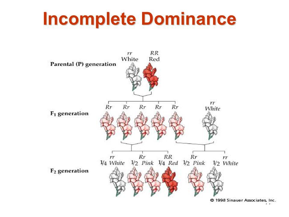 76 P 1 = __RR__ x __RW__ Phenotypic ratio: ____ : _____ : _____ Genotypic ratio: ____ : _____ : _____
