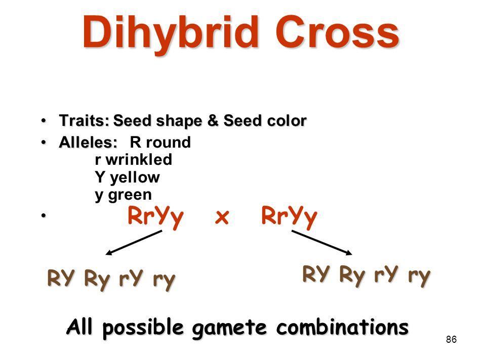 85 Answer: 1. RrYy: 2 n = 2 2 = 4 gametes RY Ry rY ry 2. AaBbCCDd: 2 n = 2 3 = 8 gametes ABCD ABCd AbCD AbCd aBCD aBCd abCD abCD 3. MmNnOoPPQQRrssTtQq