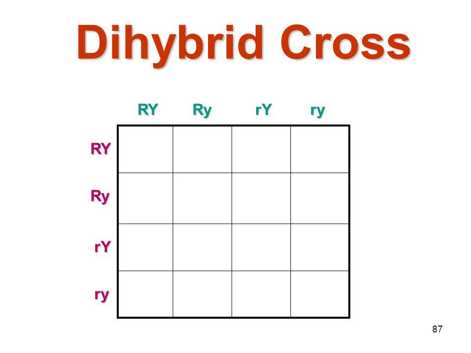 86 Dihybrid Cross Traits: Seed shape & Seed colorTraits: Seed shape & Seed color Alleles:Alleles: R round r wrinkled Y yellow y green RrYy x RrYy RY R