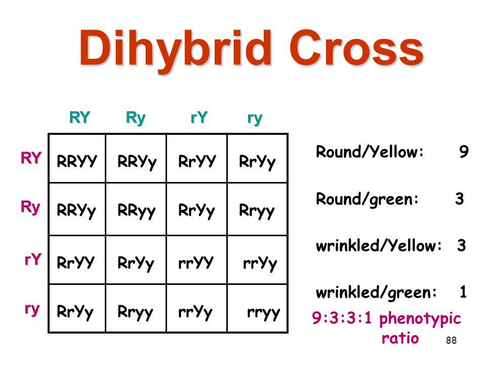 87 Dihybrid Cross RYRyrYry RYRy rY ry