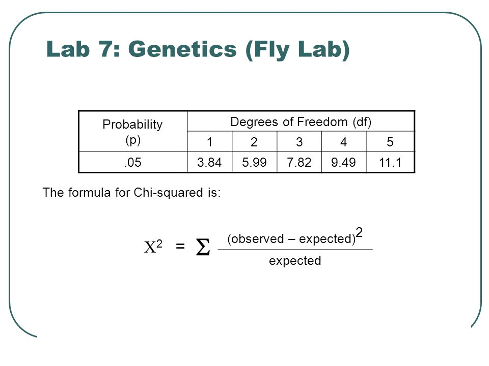 Lab 7: Genetics (Fly Lab) The formula for Chi-squared is: Probability (p) Degrees of Freedom (df) 12345.053.845.997.829.4911.1 22 =  (observed – expected) 2 expected