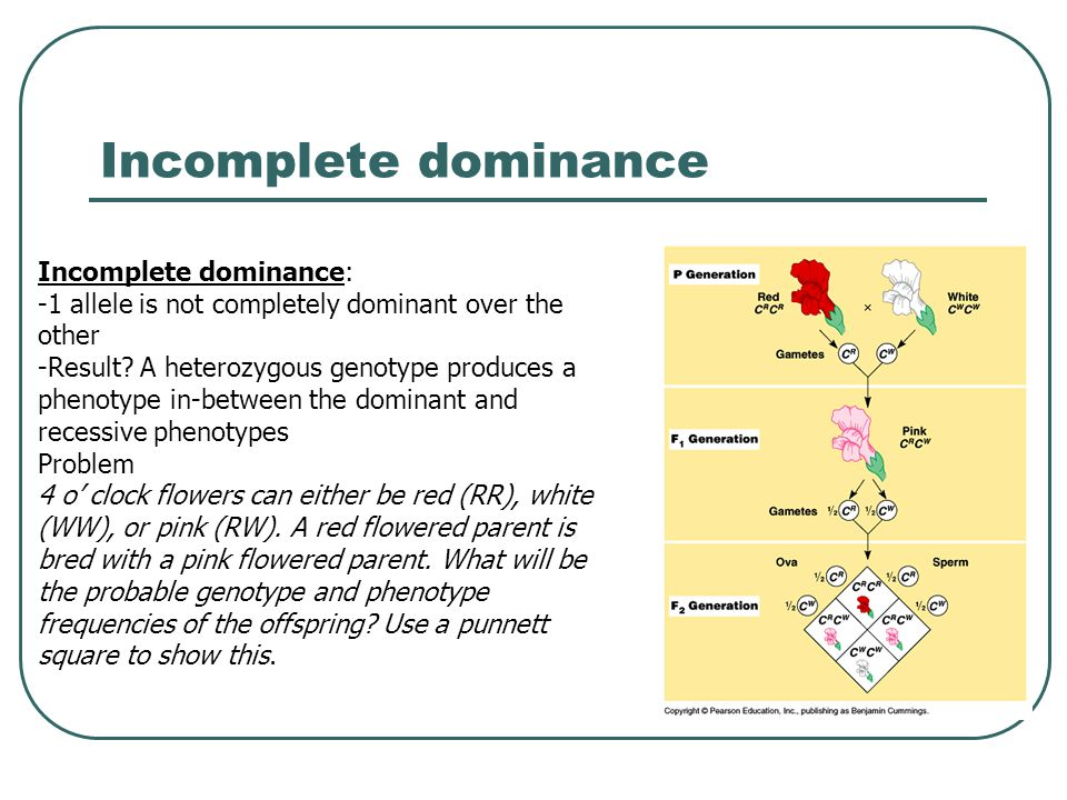 Incomplete dominance Incomplete dominance: -1 allele is not completely dominant over the other -Result.