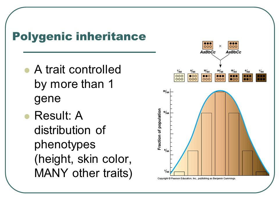 Polygenic inheritance A trait controlled by more than 1 gene Result: A distribution of phenotypes (height, skin color, MANY other traits)