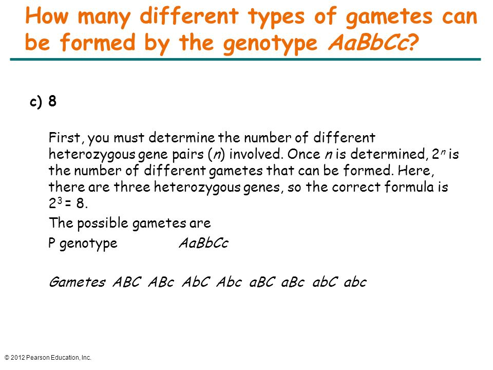 © 2012 Pearson Education, Inc. How many different types of gametes can be formed by the genotype AaBbCc? c)8 First, you must determine the number of d