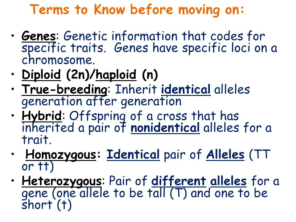 Terms to Know before moving on: Genes: Genetic information that codes for specific traits. Genes have specific loci on a chromosome. Diploid (2n)/hapl