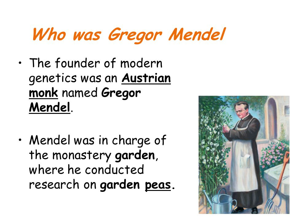 Who was Gregor Mendel The founder of modern genetics was an Austrian monk named Gregor Mendel. Mendel was in charge of the monastery garden, where he