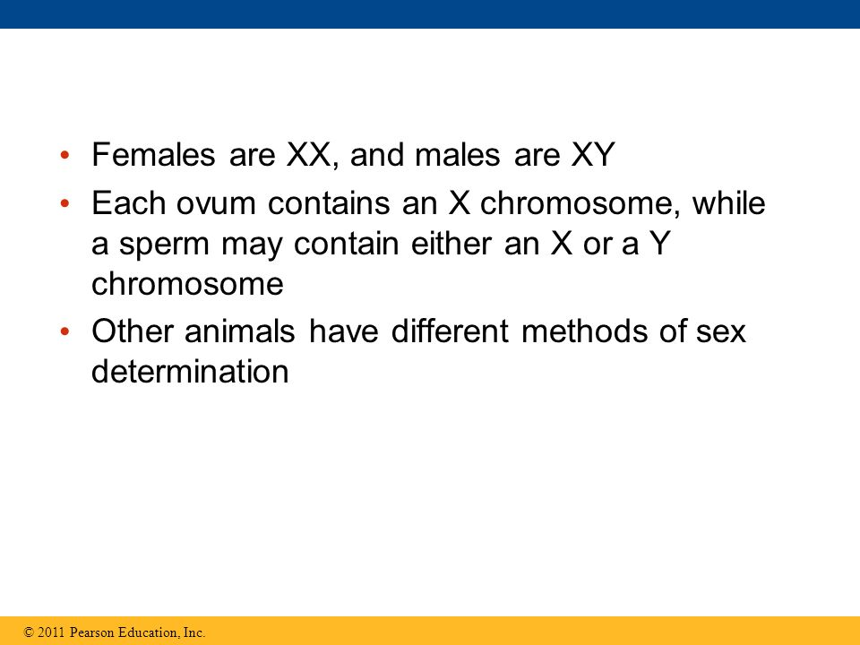 Females are XX, and males are XY Each ovum contains an X chromosome, while a sperm may contain either an X or a Y chromosome Other animals have differ