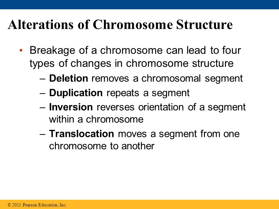 Alterations of Chromosome Structure Breakage of a chromosome can lead to four types of changes in chromosome structure –Deletion removes a chromosomal