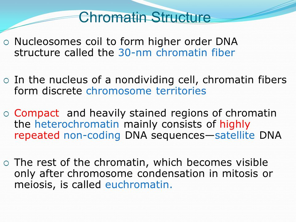  Nucleosomes coil to form higher order DNA structure called the 30-nm chromatin fiber  In the nucleus of a nondividing cell, chromatin fibers form discrete chromosome territories Chromatin Structure  Compact and heavily stained regions of chromatin the heterochromatin mainly consists of highly repeated non-coding DNA sequences—satellite DNA  The rest of the chromatin, which becomes visible only after chromosome condensation in mitosis or meiosis, is called euchromatin.