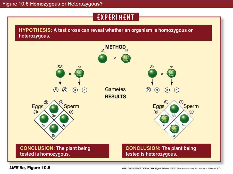 Figure 10.6 Homozygous or Heterozygous?