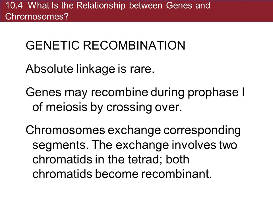 10.4 What Is the Relationship between Genes and Chromosomes.