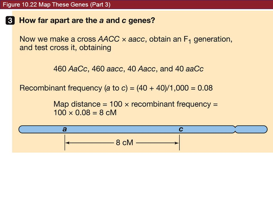 Figure 10.22 Map These Genes (Part 3)