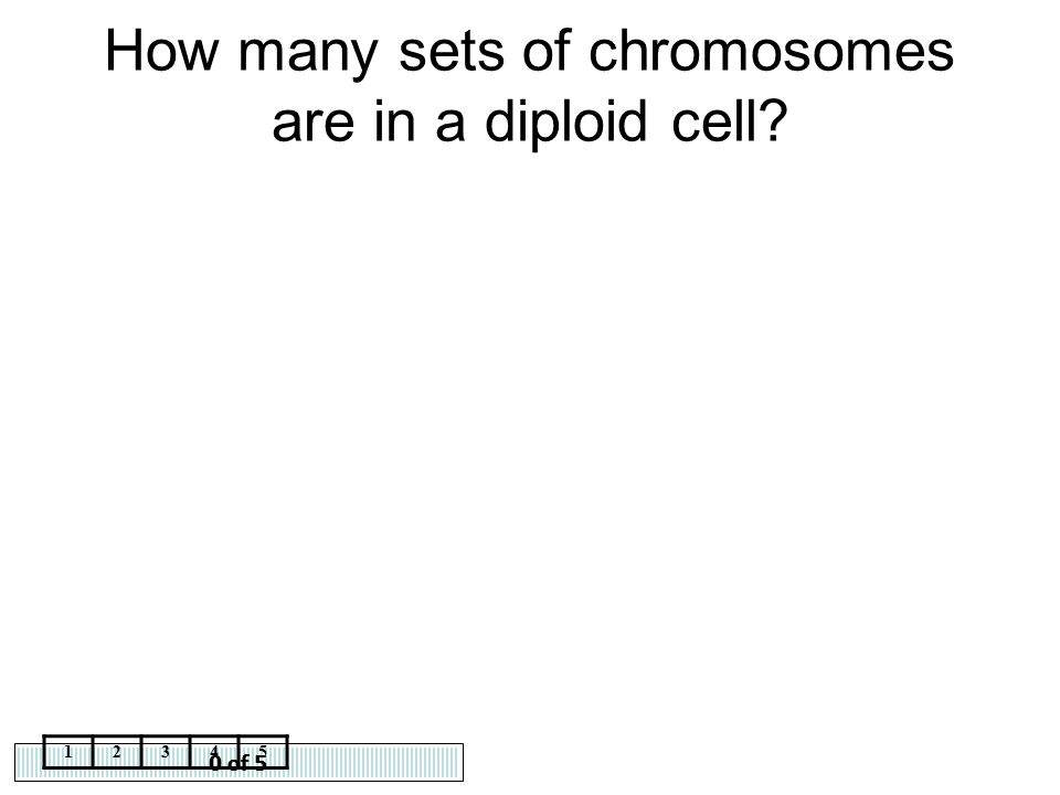 0 of 5 12345 How many sets of chromosomes are in a diploid cell?
