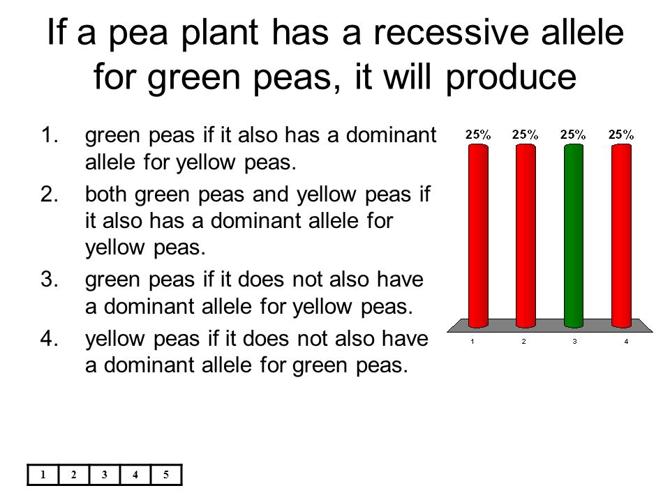 12345 If a pea plant has a recessive allele for green peas, it will produce 1.green peas if it also has a dominant allele for yellow peas. 2.both gree