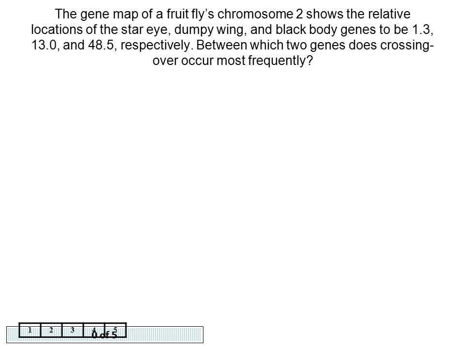 0 of 5 12345 The gene map of a fruit fly's chromosome 2 shows the relative locations of the star eye, dumpy wing, and black body genes to be 1.3, 13.0