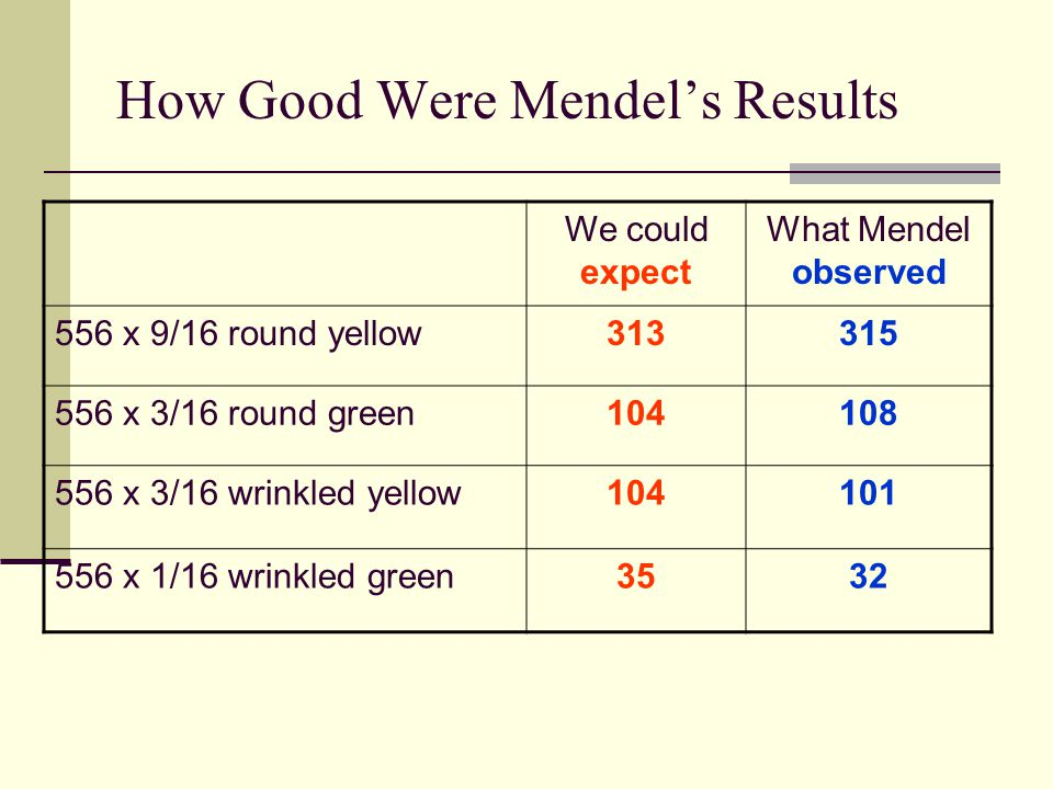 How Good Were Mendel's Results We could expect What Mendel observed 556 x 9/16 round yellow313315 556 x 3/16 round green104108 556 x 3/16 wrinkled yellow104101 556 x 1/16 wrinkled green3532