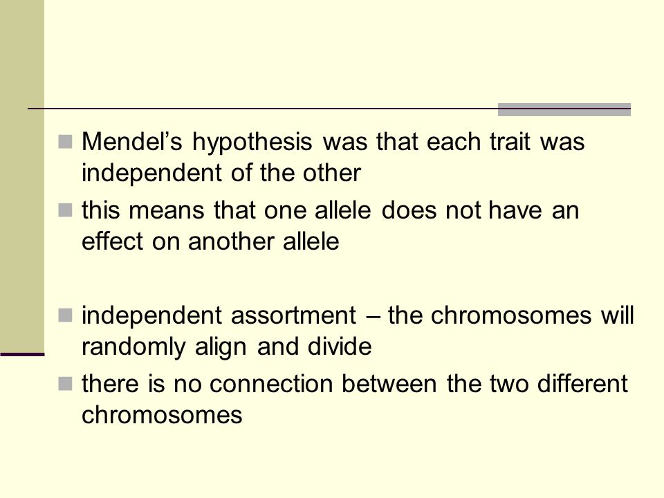 Mendel's hypothesis was that each trait was independent of the other this means that one allele does not have an effect on another allele independent assortment – the chromosomes will randomly align and divide there is no connection between the two different chromosomes