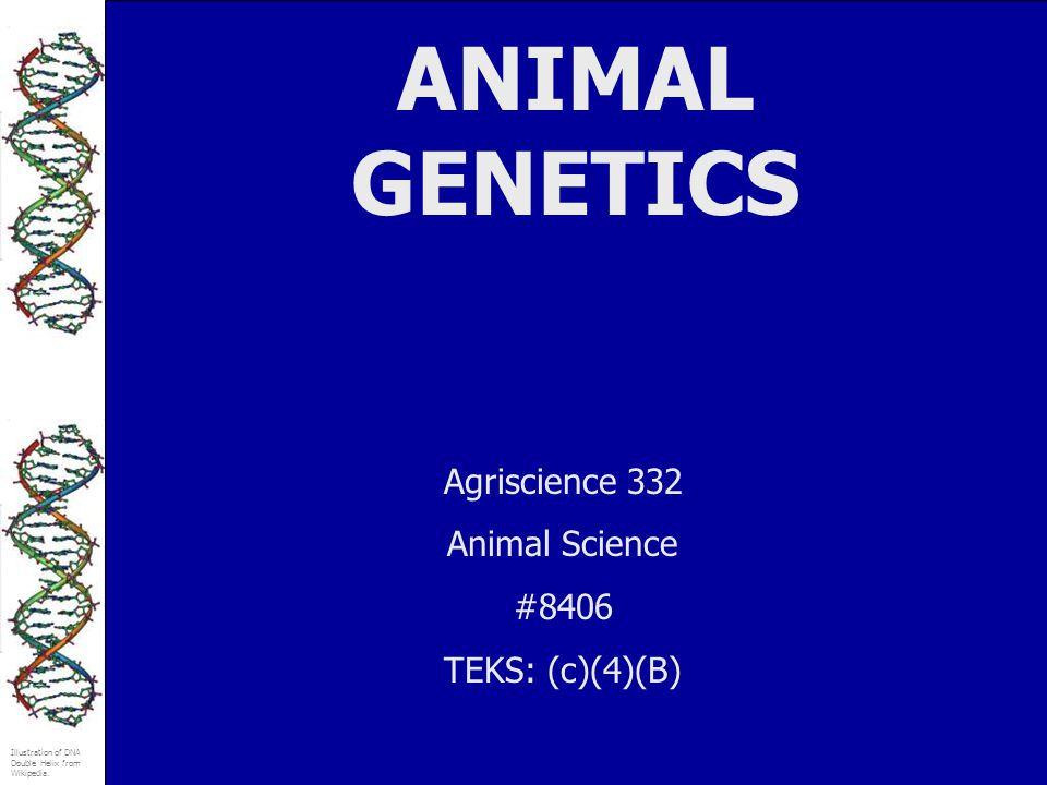 Illustration of DNA Double Helix from Wikipedia. ANIMAL GENETICS Agriscience 332 Animal Science #8406 TEKS: (c)(4)(B)