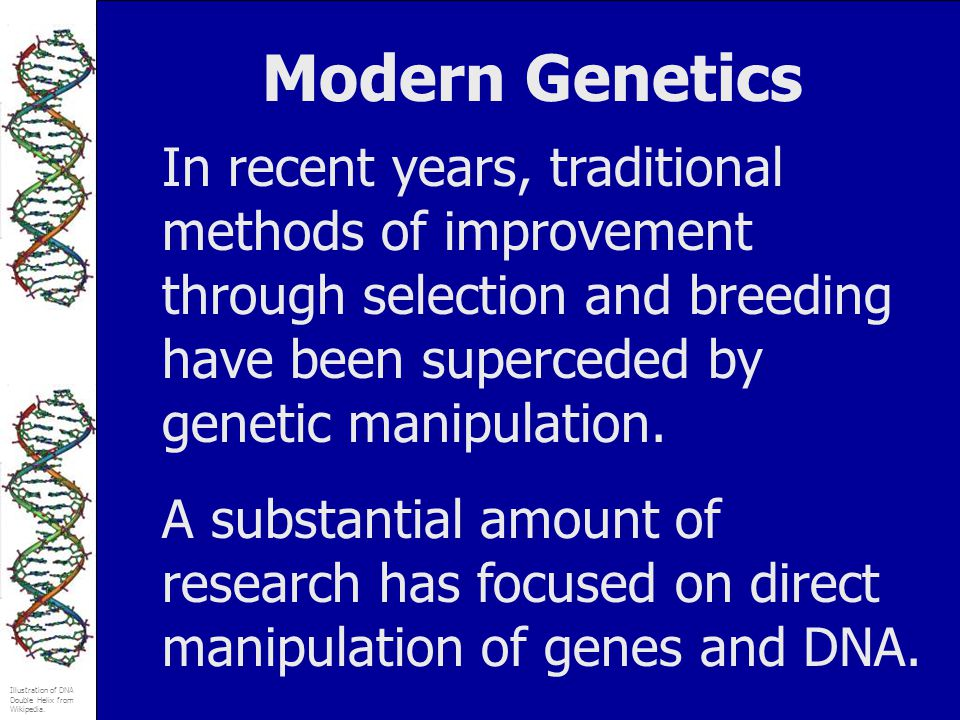 Illustration of DNA Double Helix from Wikipedia. Modern Genetics In recent years, traditional methods of improvement through selection and breeding ha