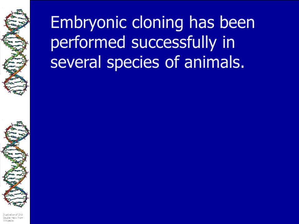 Illustration of DNA Double Helix from Wikipedia. Embryonic cloning has been performed successfully in several species of animals.