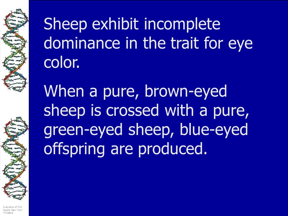 Illustration of DNA Double Helix from Wikipedia. Sheep exhibit incomplete dominance in the trait for eye color. When a pure, brown-eyed sheep is cross