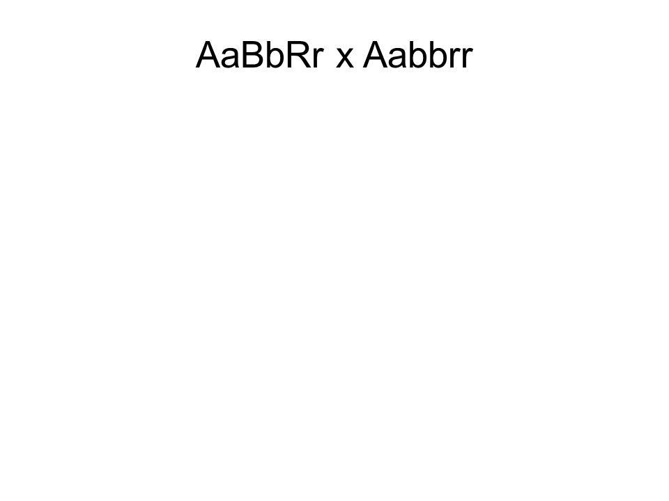 AaBbRr x Aabbrr