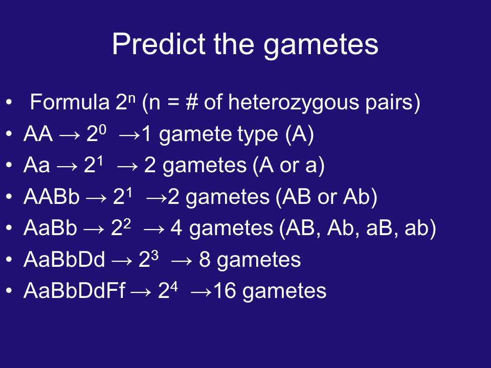 Predict the gametes Formula 2 n (n = # of heterozygous pairs) AA → 2 0 →1 gamete type (A) Aa → 2 1 → 2 gametes (A or a) AABb → 2 1 →2 gametes (AB or Ab) AaBb → 2 2 → 4 gametes (AB, Ab, aB, ab) AaBbDd → 2 3 → 8 gametes AaBbDdFf → 2 4 →16 gametes
