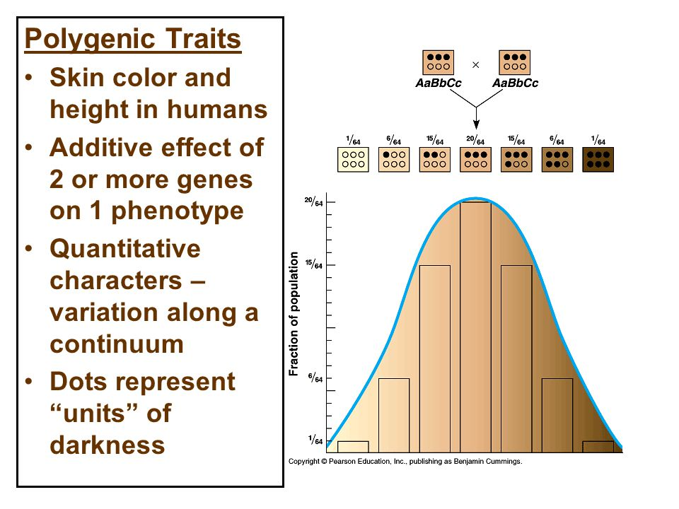 Polygenic Traits Skin color and height in humans Additive effect of 2 or more genes on 1 phenotype Quantitative characters – variation along a continuum Dots represent units of darkness