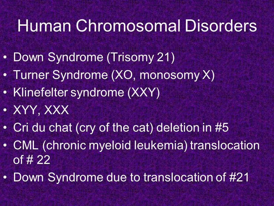 Human Chromosomal Disorders Down Syndrome (Trisomy 21) Turner Syndrome (XO, monosomy X) Klinefelter syndrome (XXY) XYY, XXX Cri du chat (cry of the cat) deletion in #5 CML (chronic myeloid leukemia) translocation of # 22 Down Syndrome due to translocation of #21