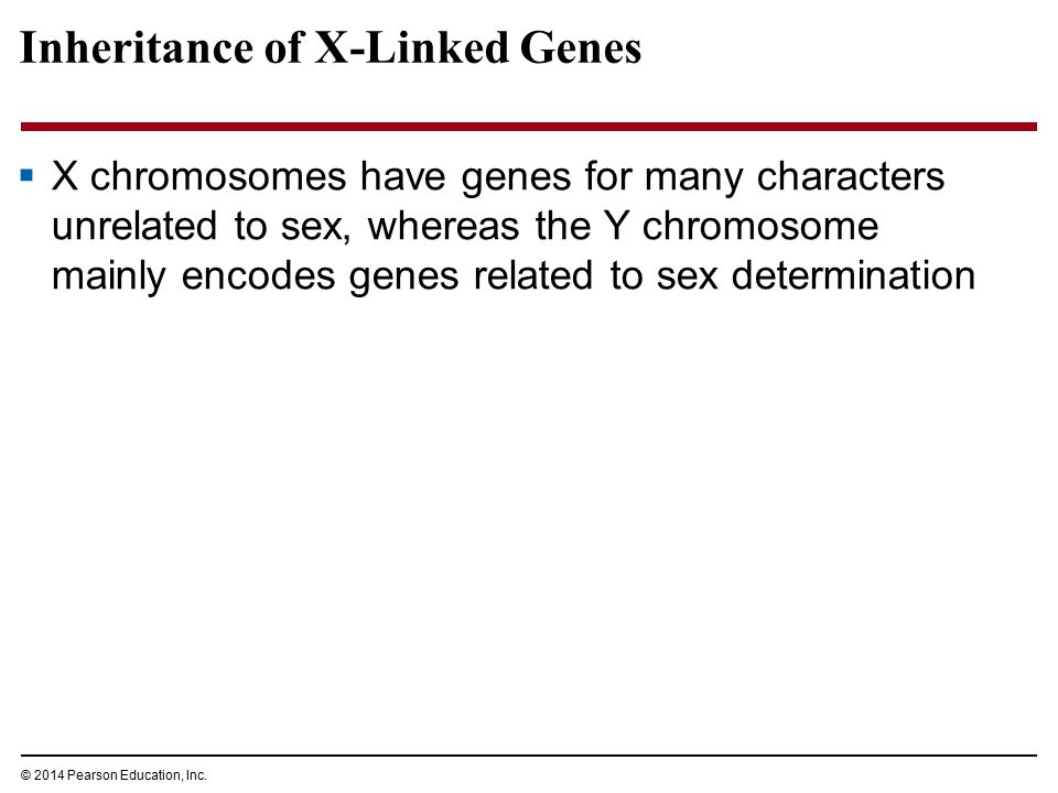 © 2014 Pearson Education, Inc. Inheritance of X-Linked Genes  X chromosomes have genes for many characters unrelated to sex, whereas the Y chromosome