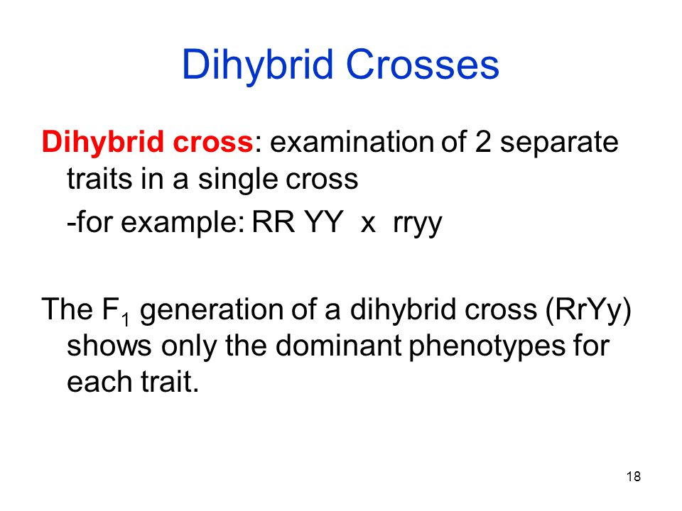 18 Dihybrid Crosses Dihybrid cross: examination of 2 separate traits in a single cross -for example: RR YY x rryy The F 1 generation of a dihybrid cro