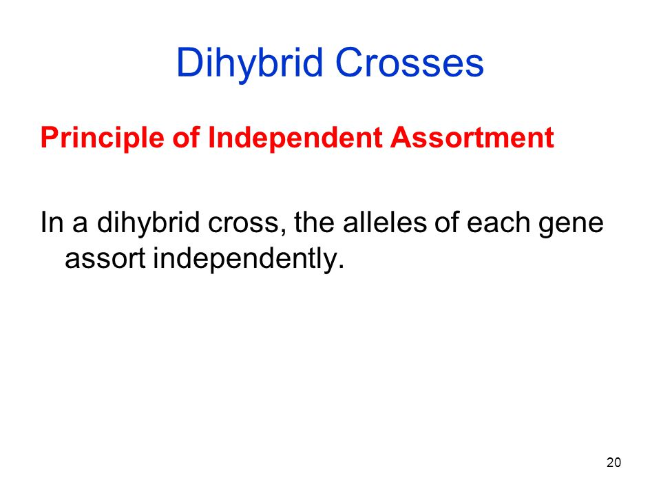 20 Dihybrid Crosses Principle of Independent Assortment In a dihybrid cross, the alleles of each gene assort independently.