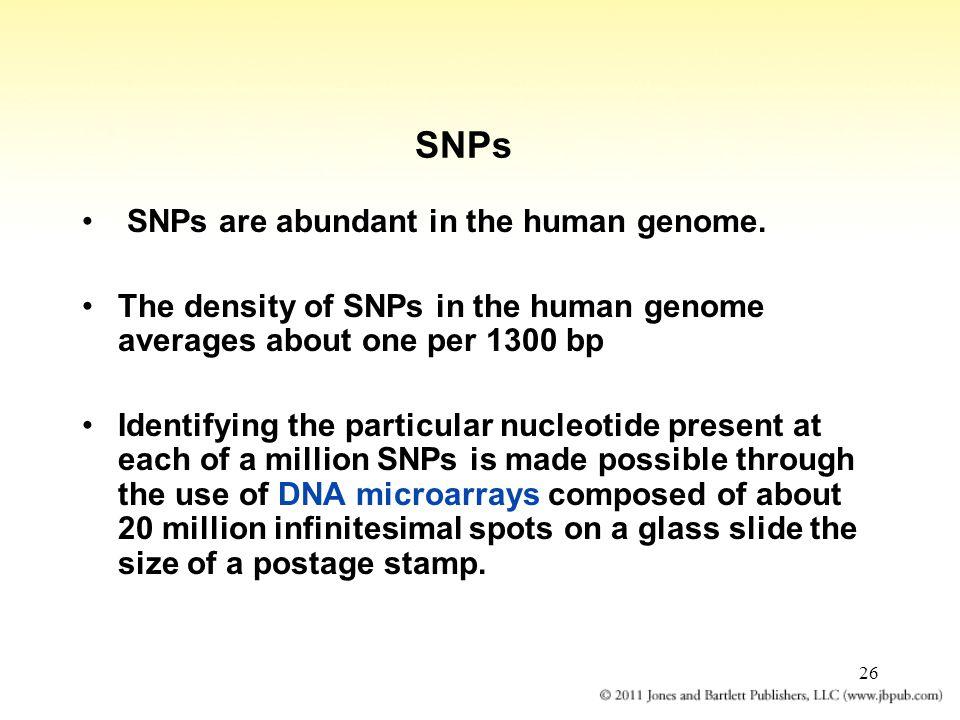 26 SNPs SNPs are abundant in the human genome.